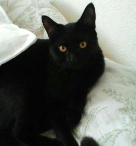 Черный умный котик