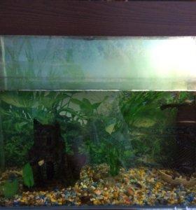 Продаю аквариум с рыбками объём 110 литров, срочно