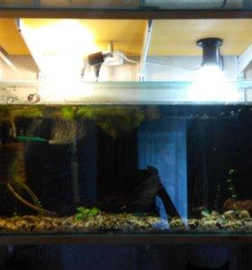 Полностью укомплектованный аквариум.
