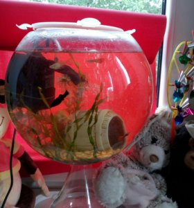 Продам аквариум,пустой