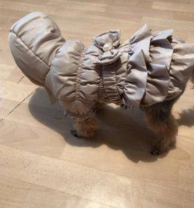 Новое осенне-зимнее пальто для маленькой собачки