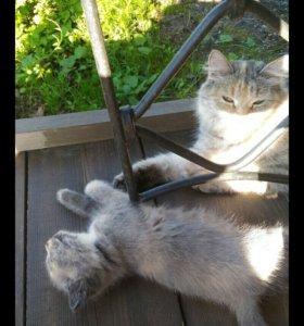 Отдам в добрые руки кошечку.