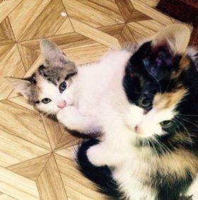 Кошечки Трехцветные 🐱🐾🐱в добрые руки!!!!