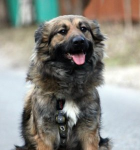 Молодая собака Сонечка