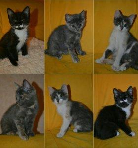 Чудесные котятки