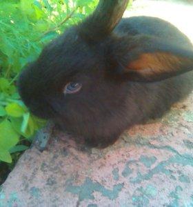 Кролики на дачу