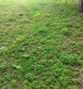 Скос травы