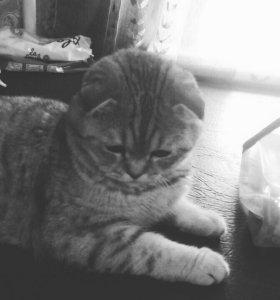 Кот на случку