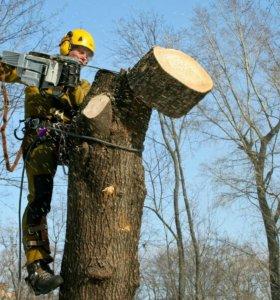 Спилю деревья по честям. Аккуратно и безопасно .