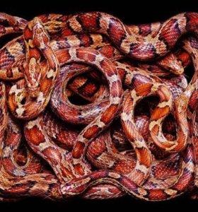 Рептилии выезд передержка