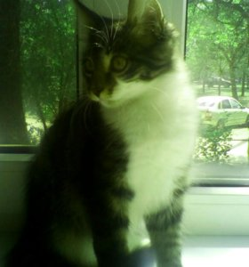 Котёнок 2,5 месяца