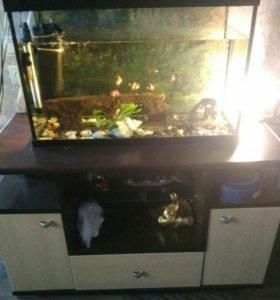 Аквариум с рыбками и со всем оборудованием