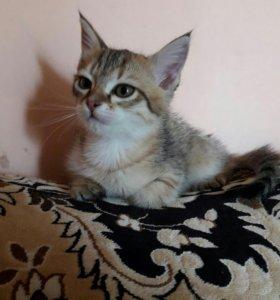 Котенок 🐈- 2 месяца