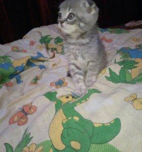 Котенка продали