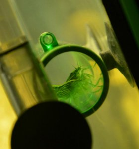 Креветки фильтраторы