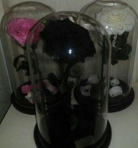 Роза красавица и чудовище
