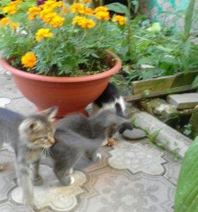 От кошки крысоловки