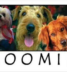 Груминг (стрижка) собак и кошек