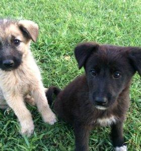 Собаки дворняжки