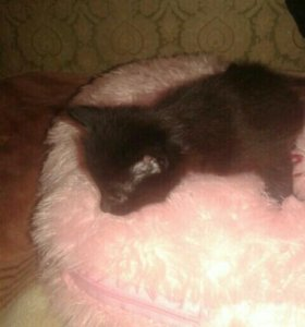 Котята 1 месяц