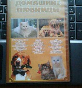 диск рвссказ о домашних животных.