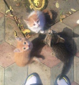 Отдам котеек в добрые руки, даром!!!