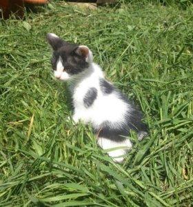 Котёнок. 2мес