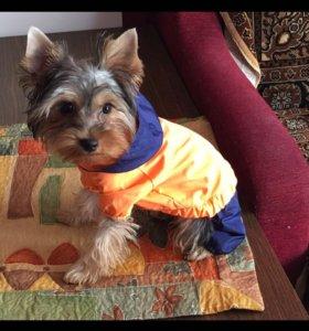 Комбинезон дождевик на мелкую собаку