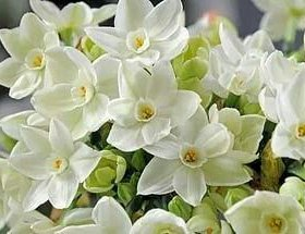 Паперуай!шапки из 10)12 цветов