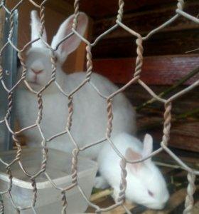 Кролики от 2 мес.