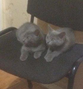 Котятки ребятки
