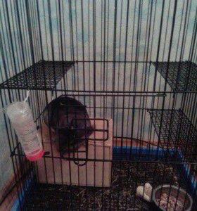 Шиншилла+клетка и пр. (мальчик) - 1,5 года