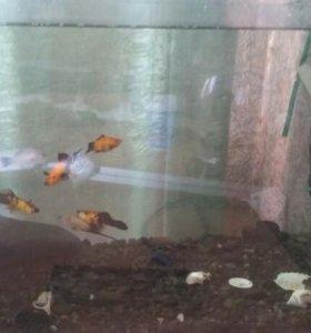 оквариум с рыбками 3 сомика  +фильтор