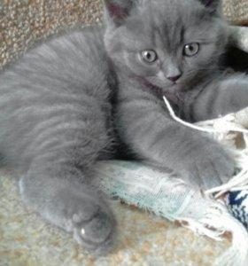 Котенок 1, 5 месяца котик