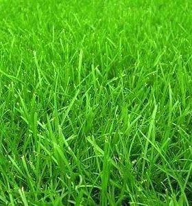 Продам газон (семена) премиум класса очень дешево!