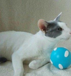 Кот Макс из приюта в новую семью