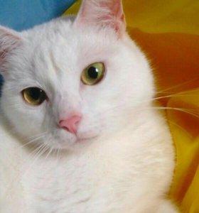 Кошка Фея из приюта в новую семью