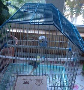 Попугайчики вместе клеткой и гнездой