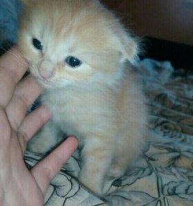Отдаю даром котят