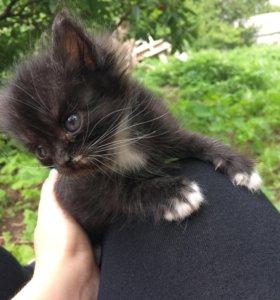 Котёнок даром в хорошие руки