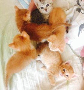 Милые котятки в добрые руки:3
