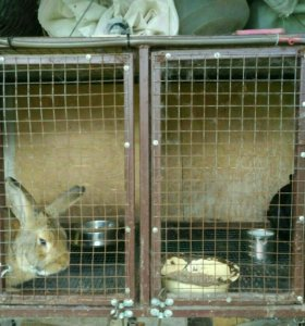 Клетки для кроликов.