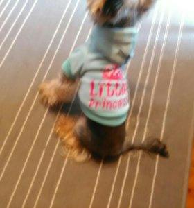 Кофта для маленькой собачки