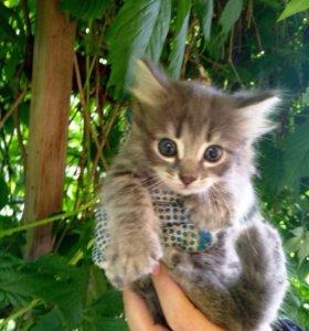 Котята, в дар