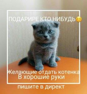 (Бесплатно) котенок
