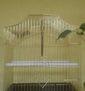 Волнистый попугай с склеткой.