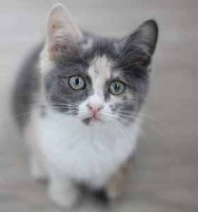 Котёнок с бесплатной стерилизацией