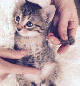 Котенок, мальчик