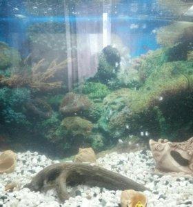Панорамный аквариум 150 л с тумбой.