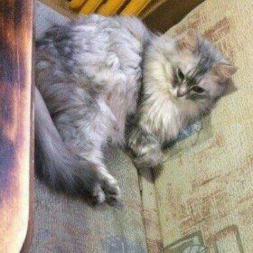 Потерялась кошка ей 15 лет.